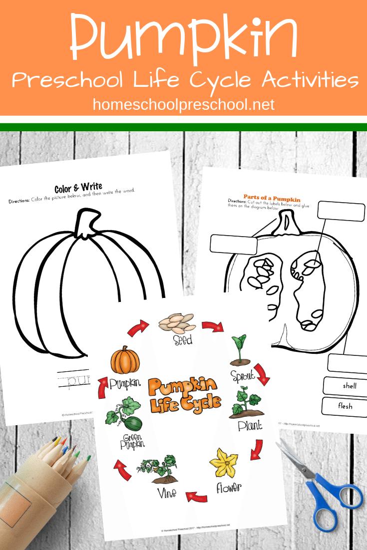 Preschool Life Cycle of a Pumpkin Printable for Fall