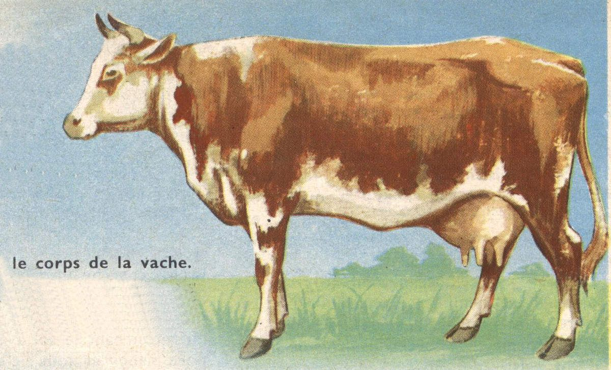 Dessin cole primaire vache en 2019 cartes animaux illustration moose art et cow - Vache normande dessin ...
