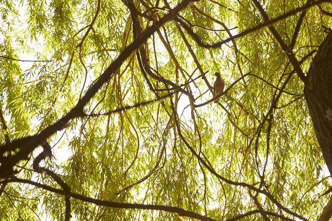 Backlit Bird by MarMa on @creativemarket