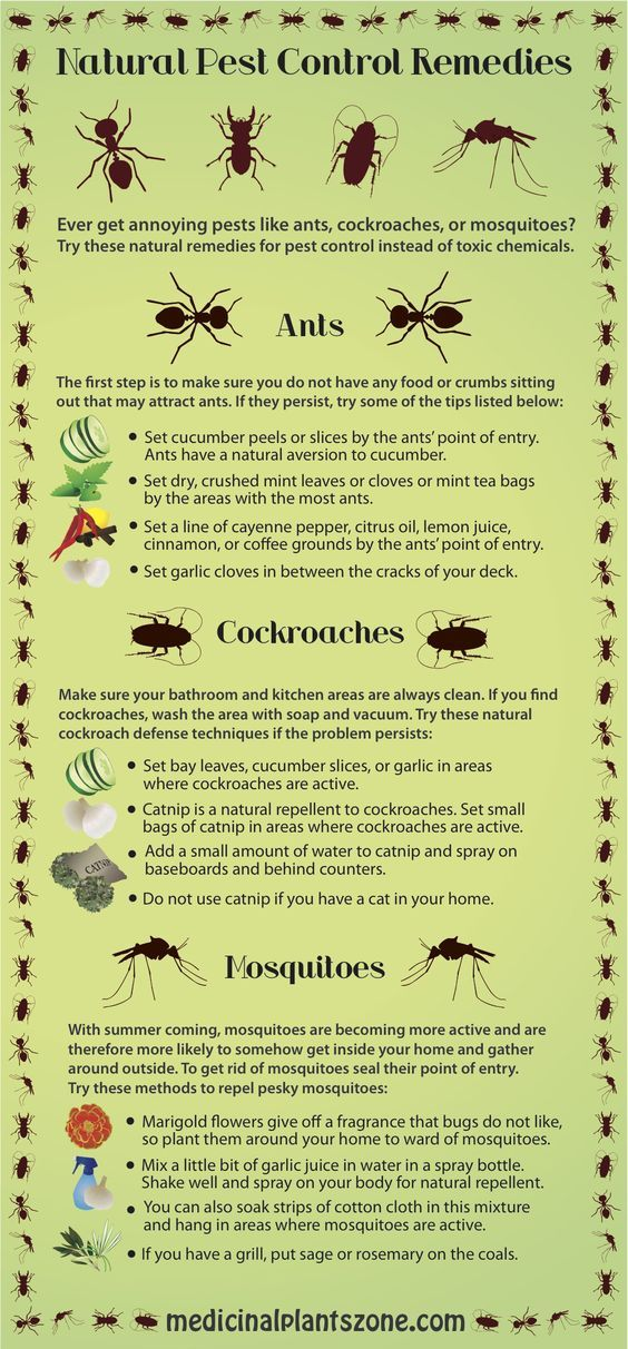 Natural Pest Control Remedies You\u0027re Bugging Me Pinterest Pest
