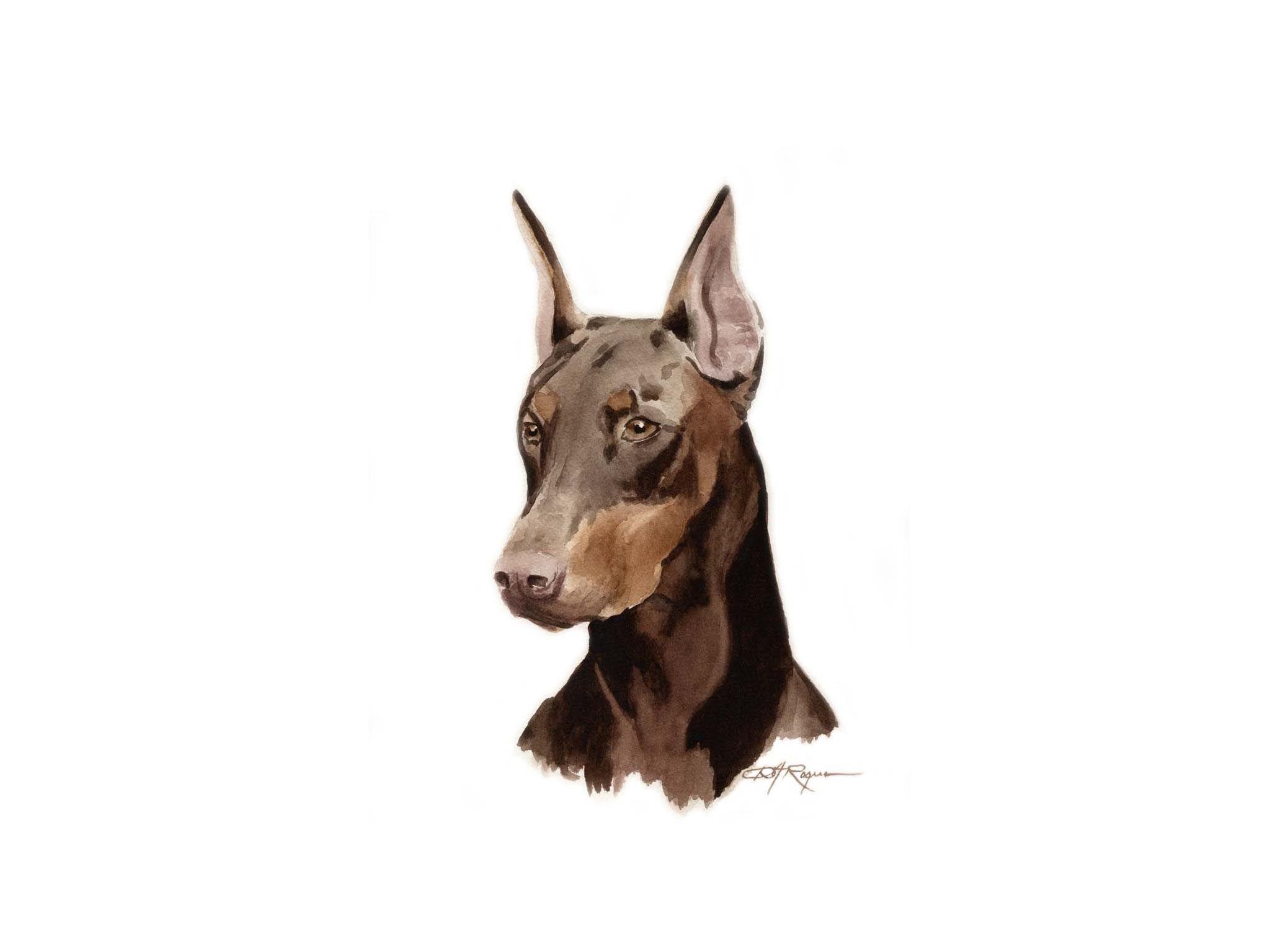 Doberman Pinscher Wallpapers Hd Download Doberman Doberman Pinscher Pinscher Doberman dog hd wallpaper