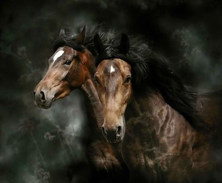 Two in the wild - pair, horses, gallop, white blaze, brown and black, wild