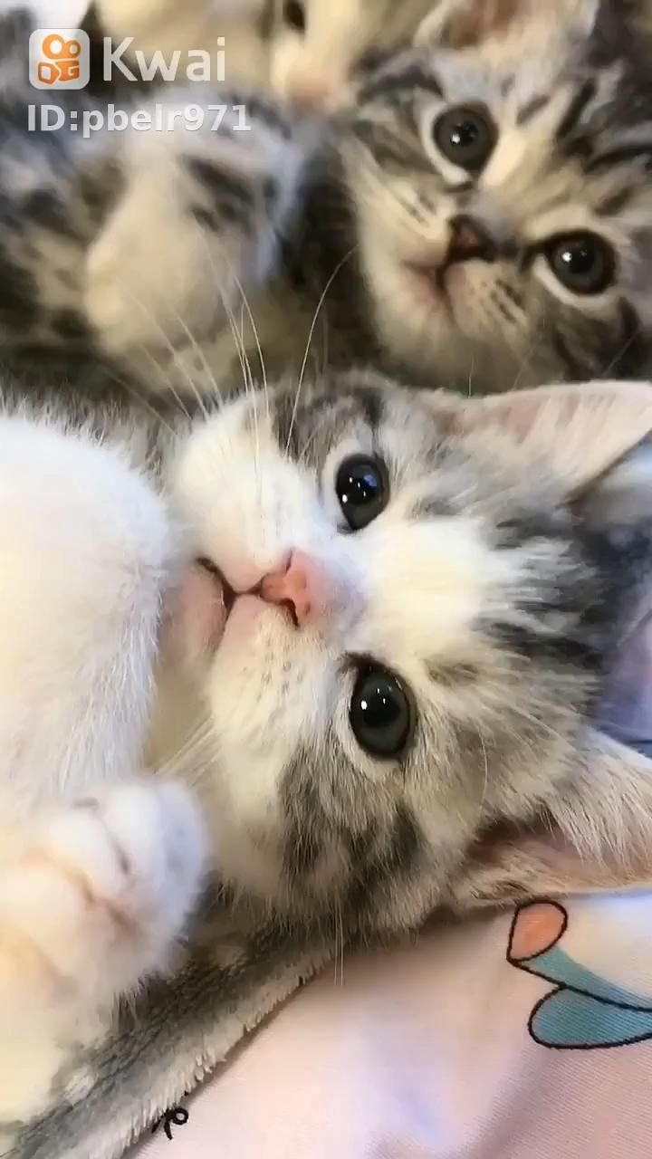 Kittens With The Most Beautiful Eyes Video In 2020 Cute Baby Cats Kittens Cutest Cute Cats