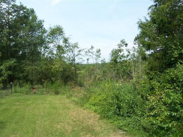 20.835 - Acres. Approximately 1 acre in pasture. Spring and creek. 2 story barn with shed storage.  Well and septic on property.  Replanted in loblolly pines.