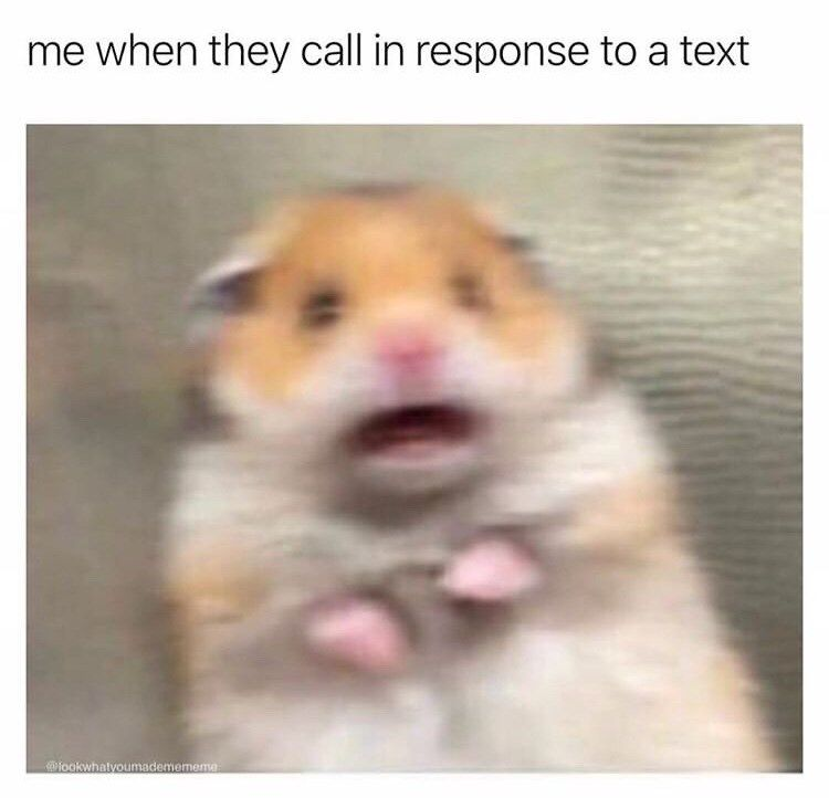 29 Funny Memes For The Comedy Starved Funny Profile Pictures Funny Hamsters Funny Profile
