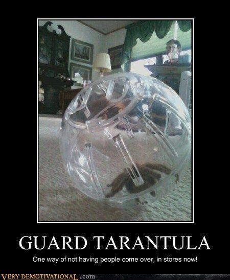 tarantula meme | GUARD TARANTULA - Cheezburger