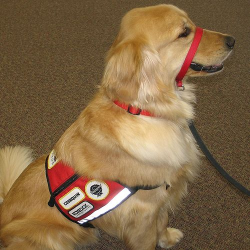Emotional Support Dogs and other animals making life a little easier ...