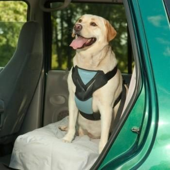 Bergan Auto Harness With Tether Dog Car Harness Dog Car Dog And