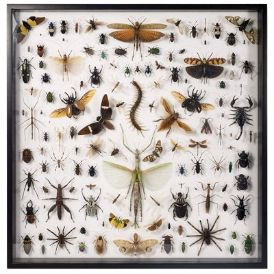 museum_quality_insects_collection_-_mixed_insects_inv135_m6211.jpeg (400×400)
