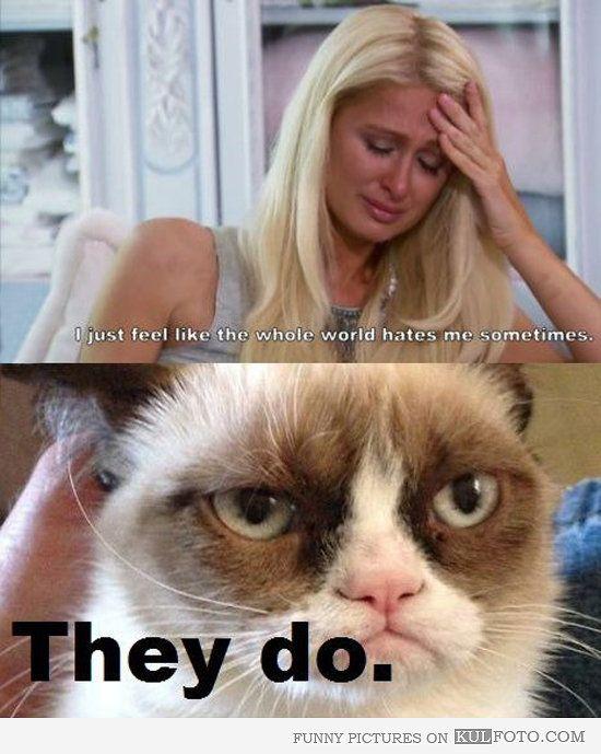 Grumpy Cat Cheering Up Paris Hilton Grumpy Cat Quotes Funny Grumpy Cat Memes Grumpy Cat Humor