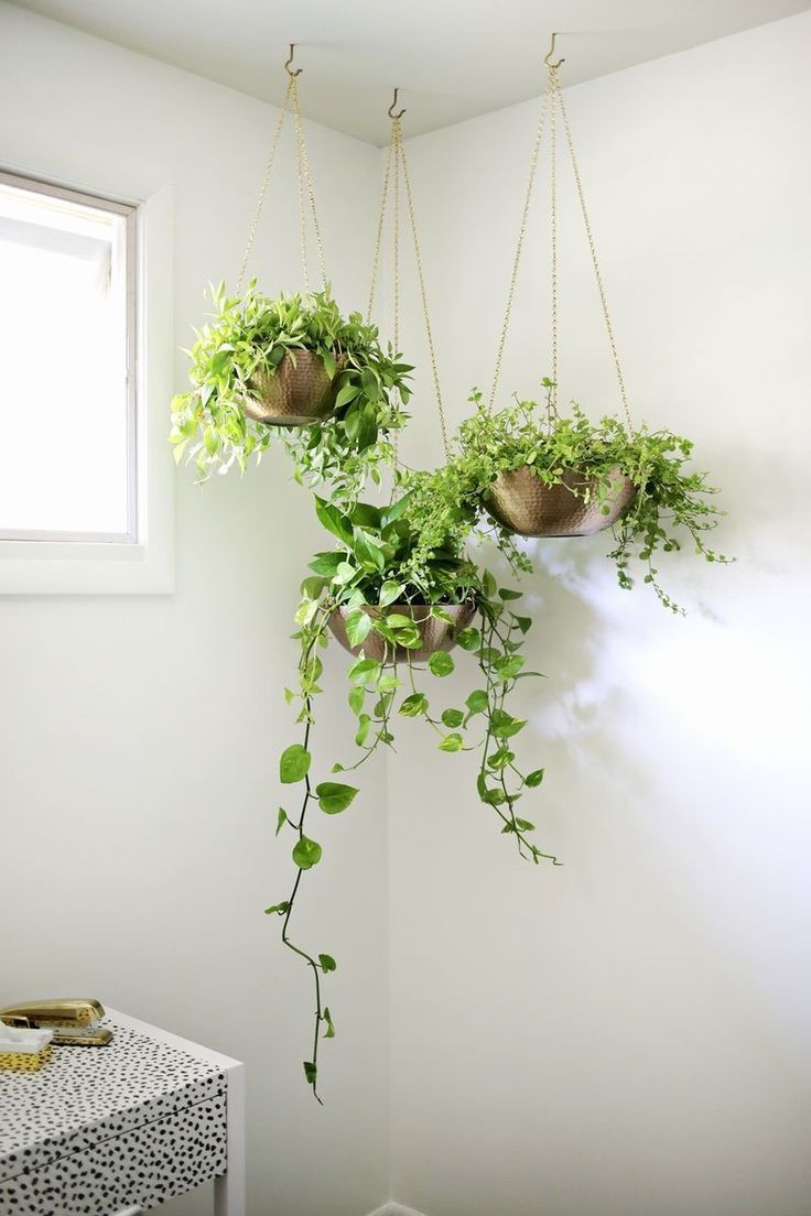 three hanging copper baskets with green waterfalling indoor plants coming from the ceiling in the corner of the room with white walls