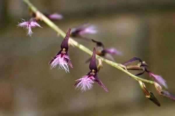 ORQUIDÁRIO: Venda de Orquídeas