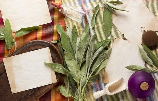 sauge plantation entretien et r colte herbes aromatiques pinterest. Black Bedroom Furniture Sets. Home Design Ideas