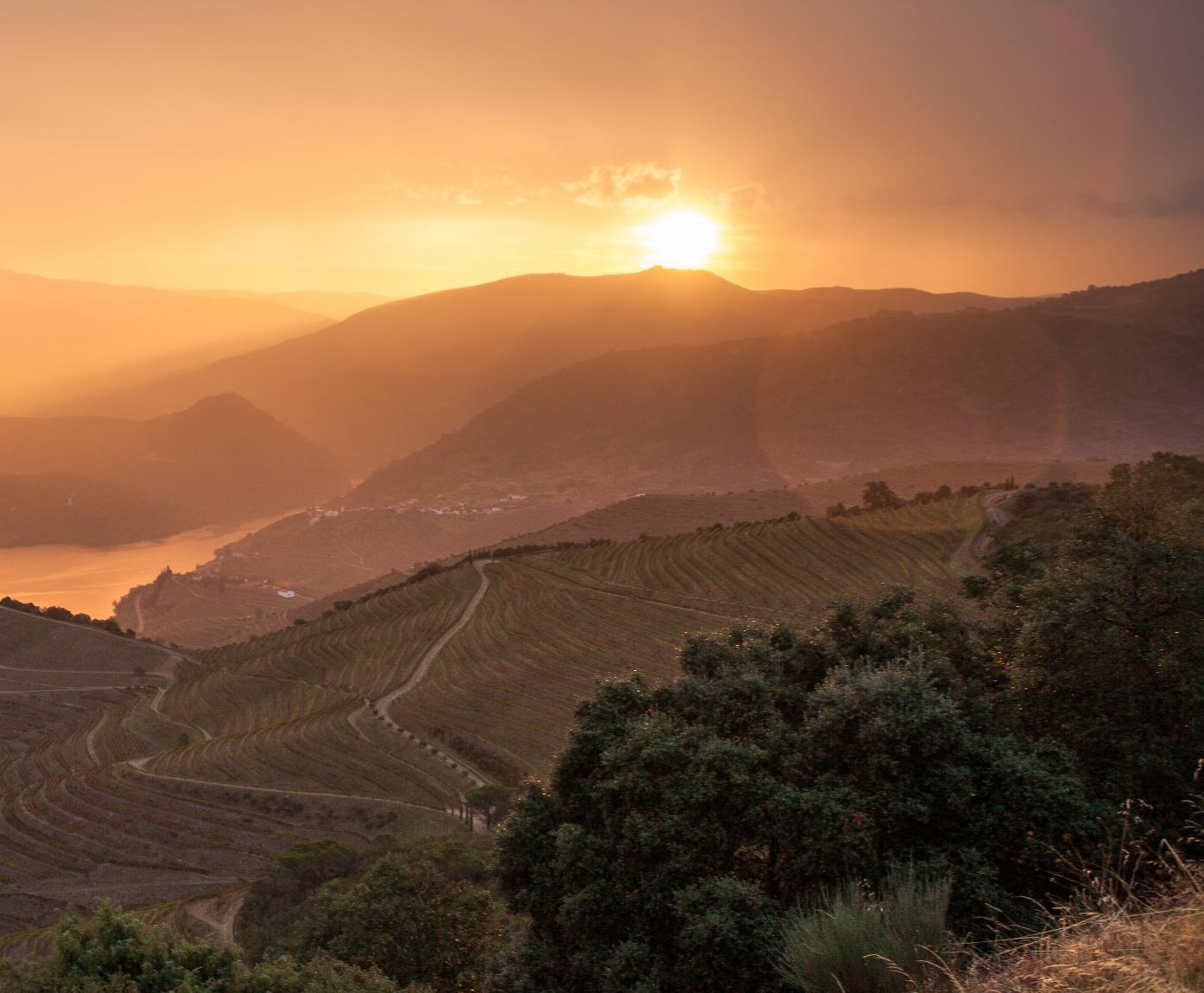 Douro Valley #valedaveiga #valedaveigadouro #vinho #vino #wine #winelovers #winetime #instawine #douro #douroriver #riodouro #vineyard #dourovalley #valedodouro #portuguesewines #vinhosdeportugal #winepassion #instawine #dourowines #dourowine