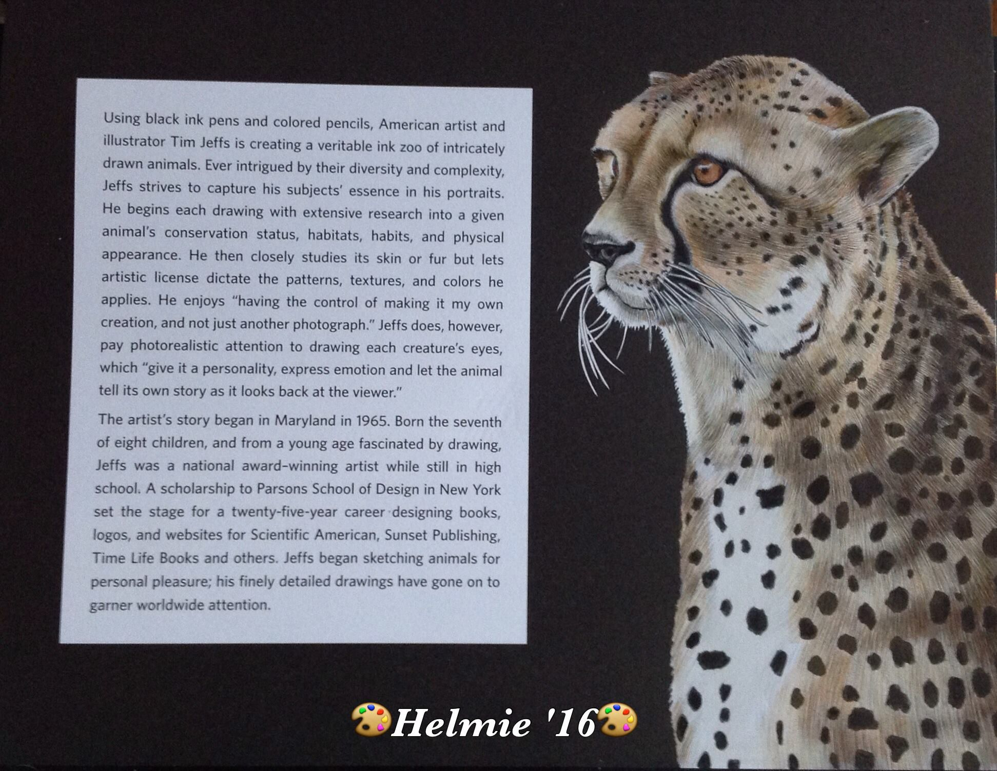 cheetah introduction page by helmie faessen animals in detail