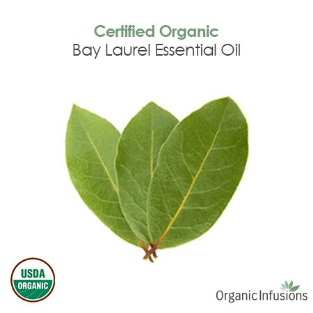 Organic Infusions presents 100% pure, steam distilled, therapeutic grade, Certified Organic Bay Laurel Essential Oil (Laurus nobilis).