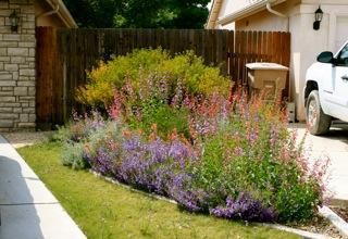 A Native Plant Garden In Bakersfield, California...I Like How The Lfront