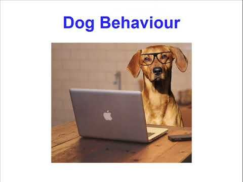 One of The Top Dog Training Websites - Come and Have a Look Around