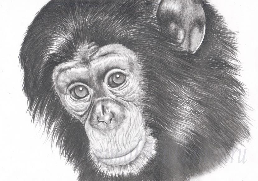 Auf Diese Seite Erkennen Sie Wie Kann Man Einen Affe Realistisch