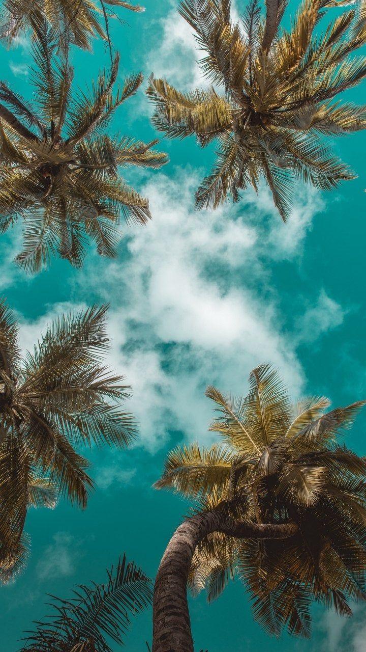 Reddit - phonewallpapers - Palmtrees in the sky