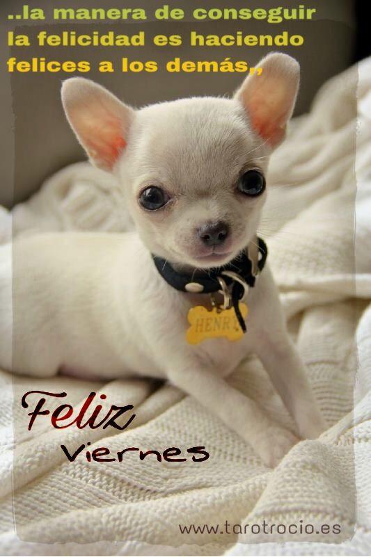 Resultado de imagen de imagenes de FELIS  VIERNES  BONITAS