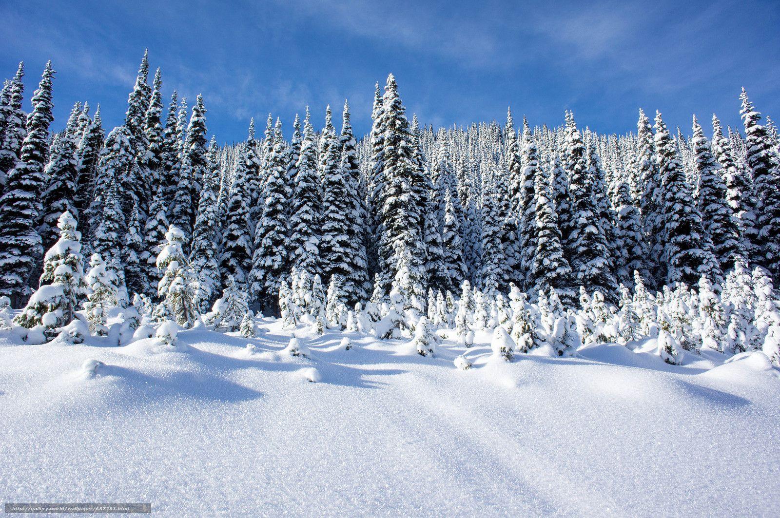Scaricare gli sfondi inverno nevicata derive alberi for Immagini desktop inverno