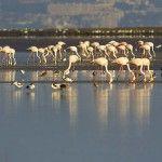 Birdwatching on Sado´s Nature Estuary and reserve, Setubal, Portugal