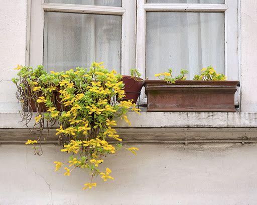 Paris in Yellow!