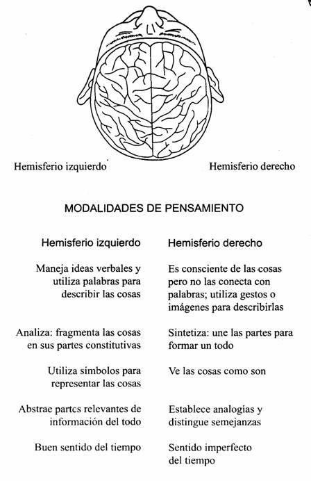 ... Especialización de los hemisferios cerebrales. MODALIDADES DE PENSAMIENTO.