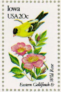 Wild Prairie Rose state flower of Iowa