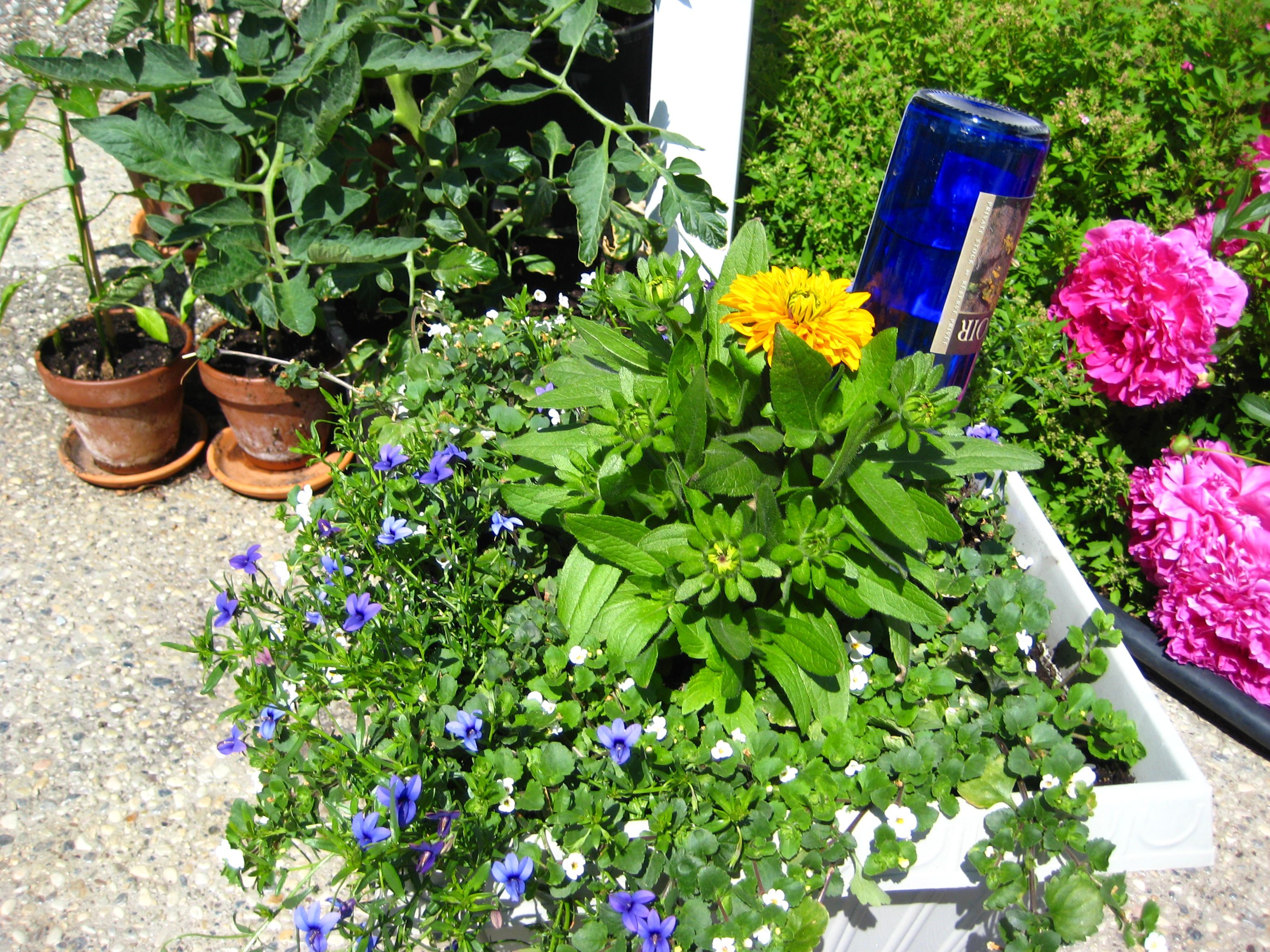 recycle a wine bottle to water your containers, plants. Just like ...