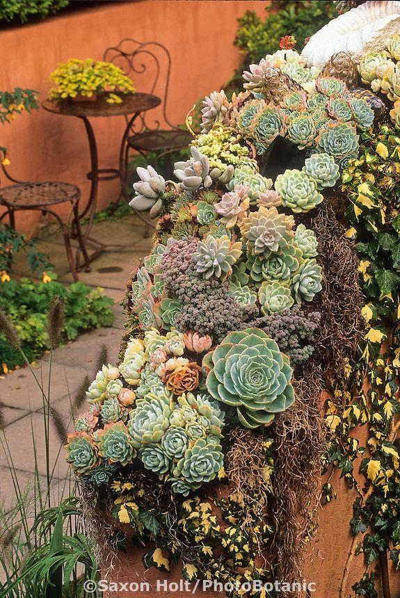 Succulents On Thomas Hobbs' Garden Wall As Seasonal