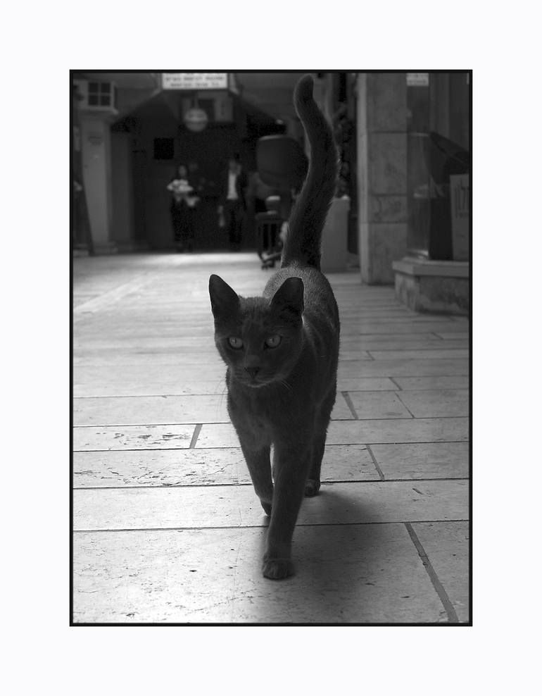 Photo of Original Animal Photography by Motty Levy   Documentary Art on Paper   The Black Cat. With a limited Edition of 15