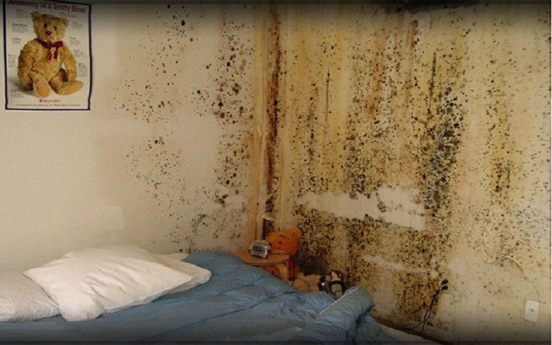 Expert mold removal and remediation services in conyers