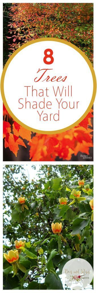 8 Trees That Will Shade Your Yard,  8 Trees That Will Shade Your Yard,