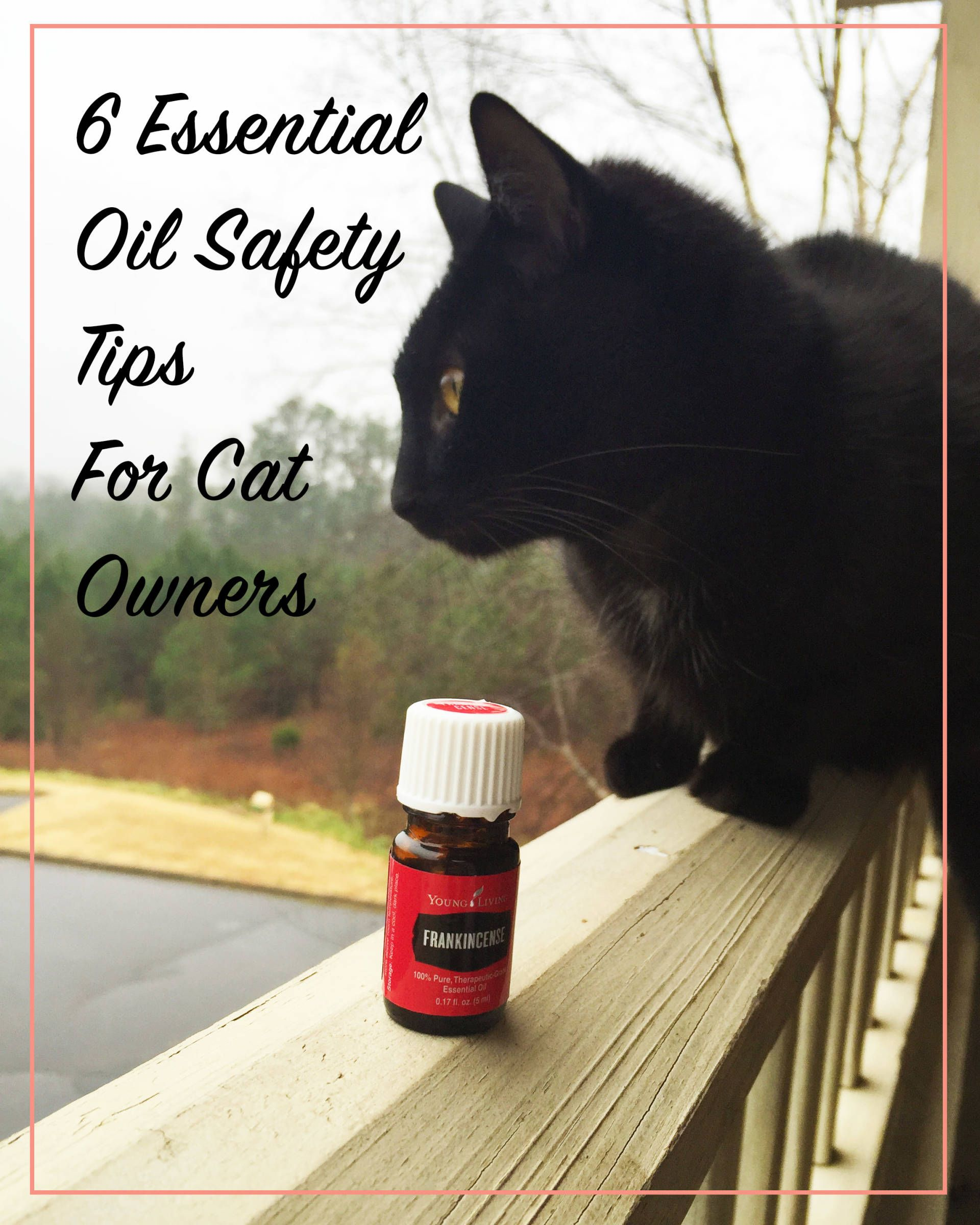 6 Essential Oil Safety Tips For Cat Owners