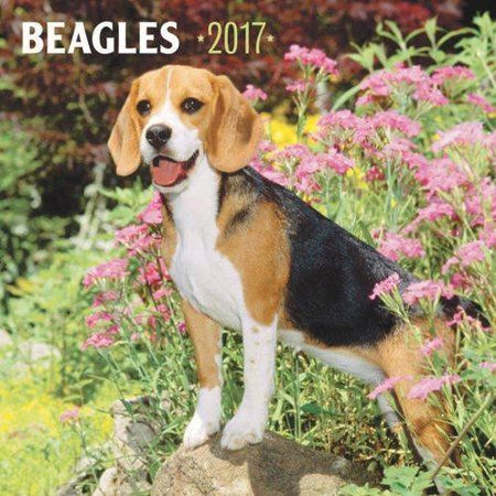 Office Supplies Beagle Amazing Photography Calendar