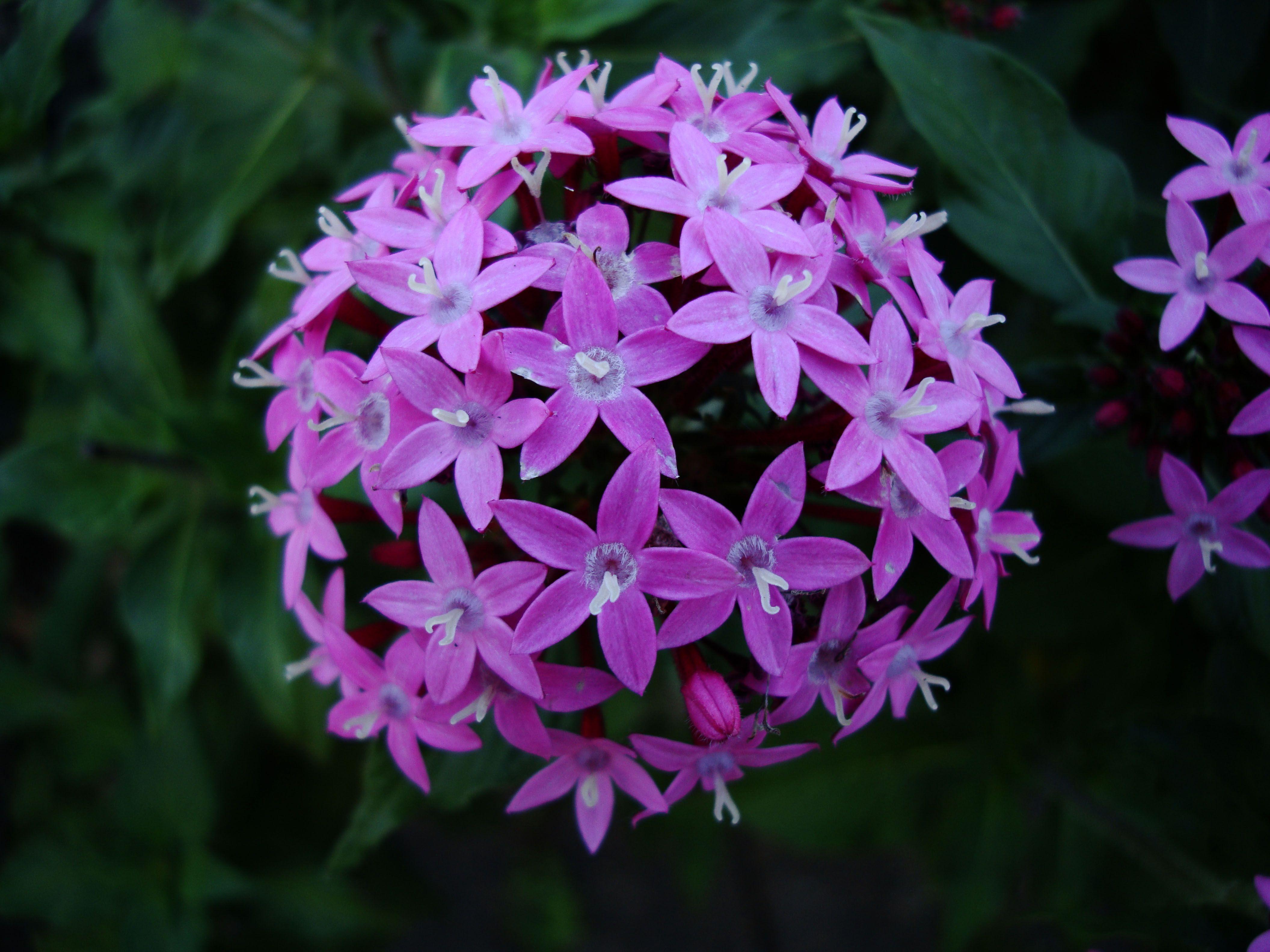 Spring Flowers Malaney Queensland Australia 014 Flowers