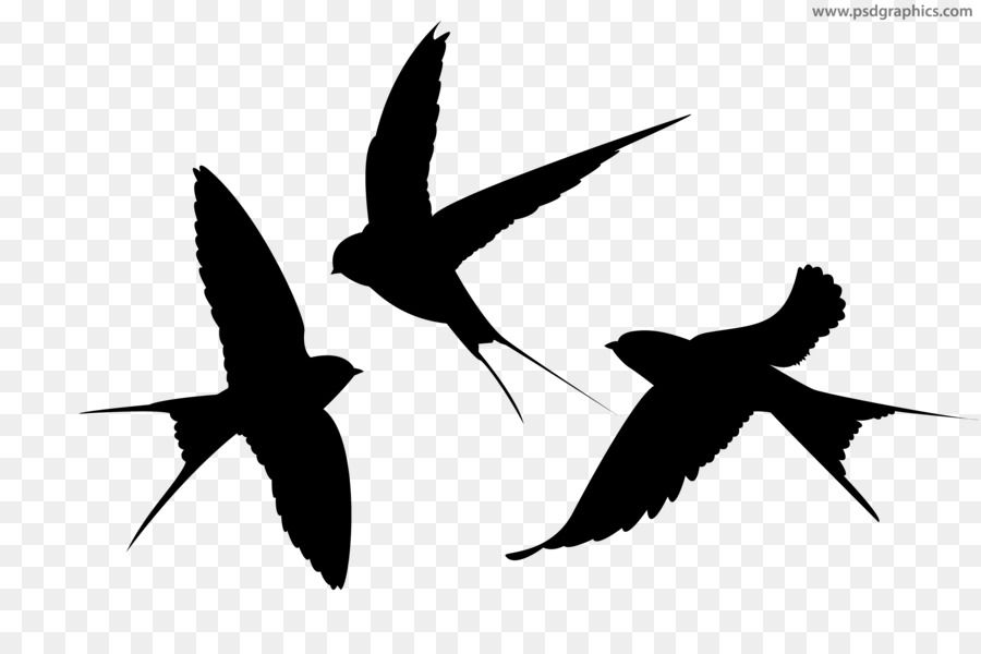 Swallow Bird Lichun Swallows Fly Png Download 2953 2953 Free Transparent Swallow Png Download Flying Bird Silhouette Bird Silhouette Bird Tattoo Back