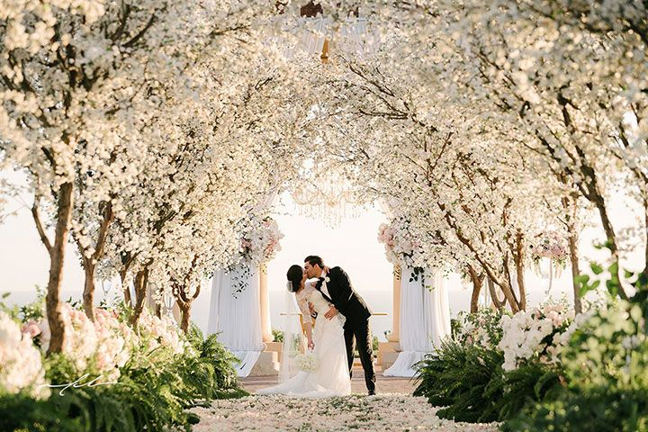 Spectacular Cherry Blossom Tree Lined Wedding Aisle Magical Photo Amid The Blossoms