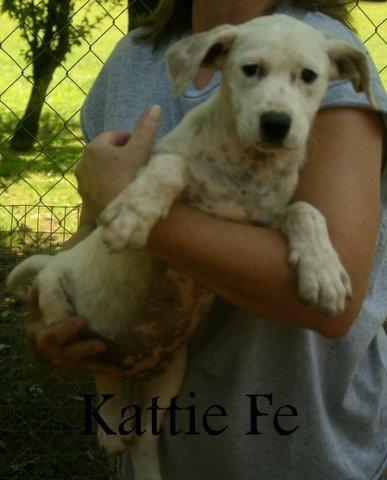 Petfinder  Adoptable   Dog   Boxer   Danbury, CT   Kattie