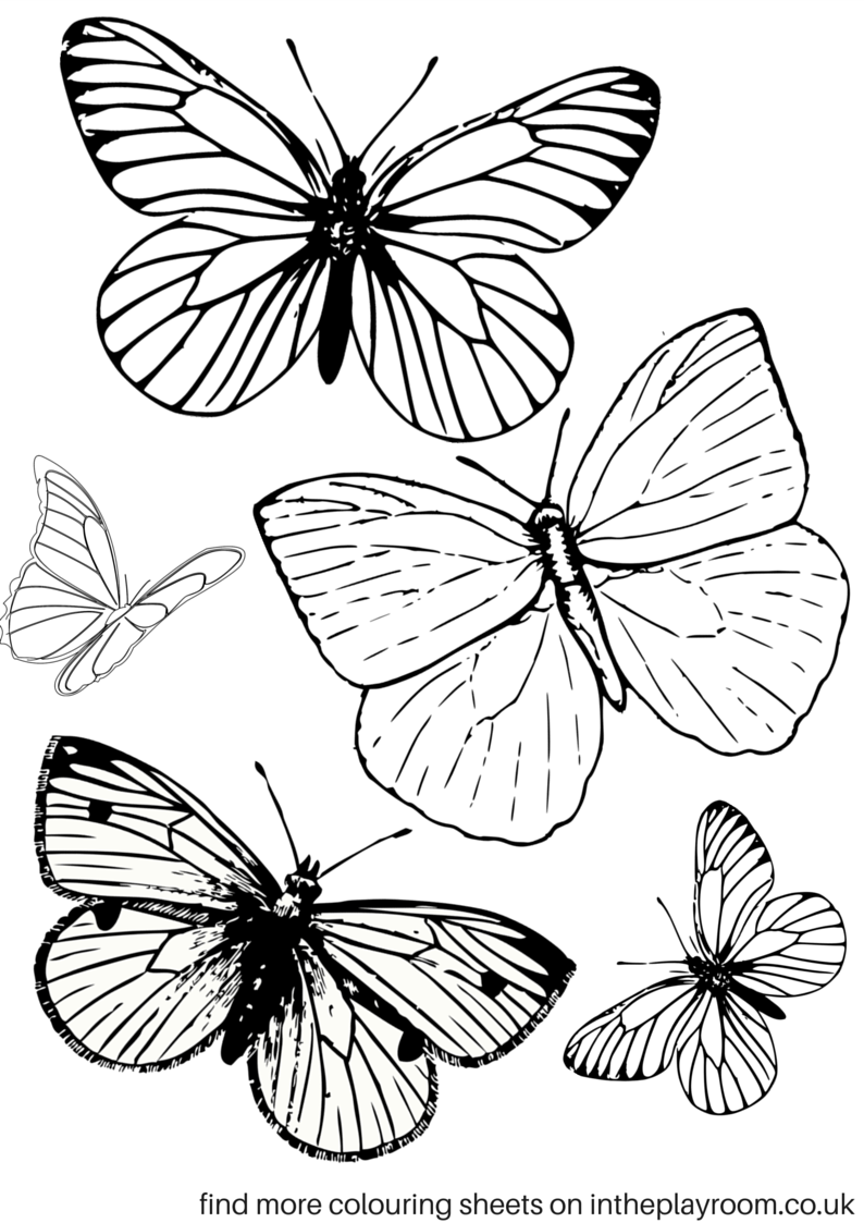 Butterflies colouring page