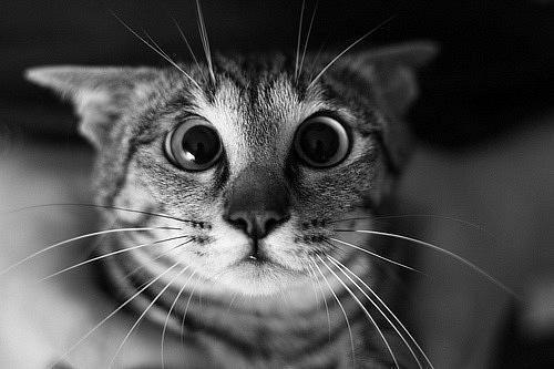 """catsbeaversandducks:    """"What?! What do you mean no more tuna?!""""  Via Ahmet Sicakkan"""