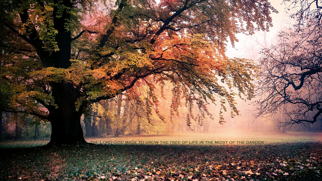 3840x1569 autumn 4k hd wallpaper download