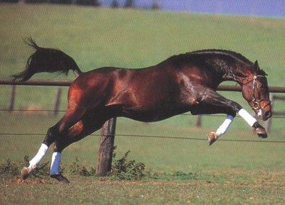 Criadores Argentinos de Caballos Cuarto de Milla | caballos ...