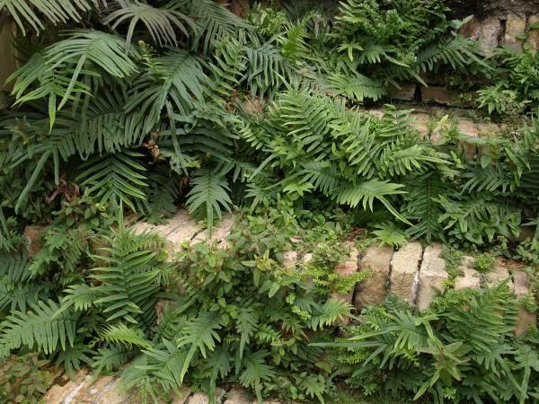 Steps Of St. Croix by Dennis Stein #tropischelandschaftsgestaltung
