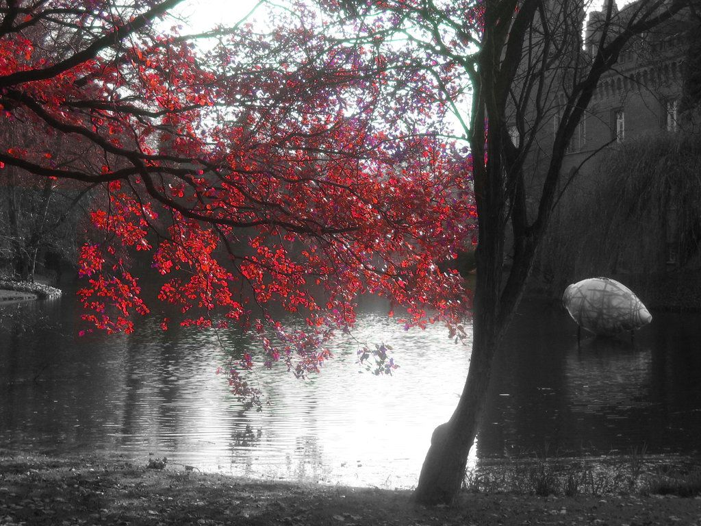 Cherry Blossom Tree By Layingquiet On Deviantart Cherry Blossom Tree Blossom Trees Cherry Blossom