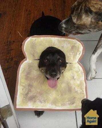 Cute Halloween Dog Costume Puppy Is Toast Dog Halloween