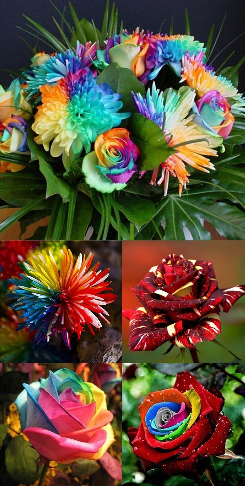 beautiful color flowers | Too Cool Not to Pin | Pinterest | Flowers ...