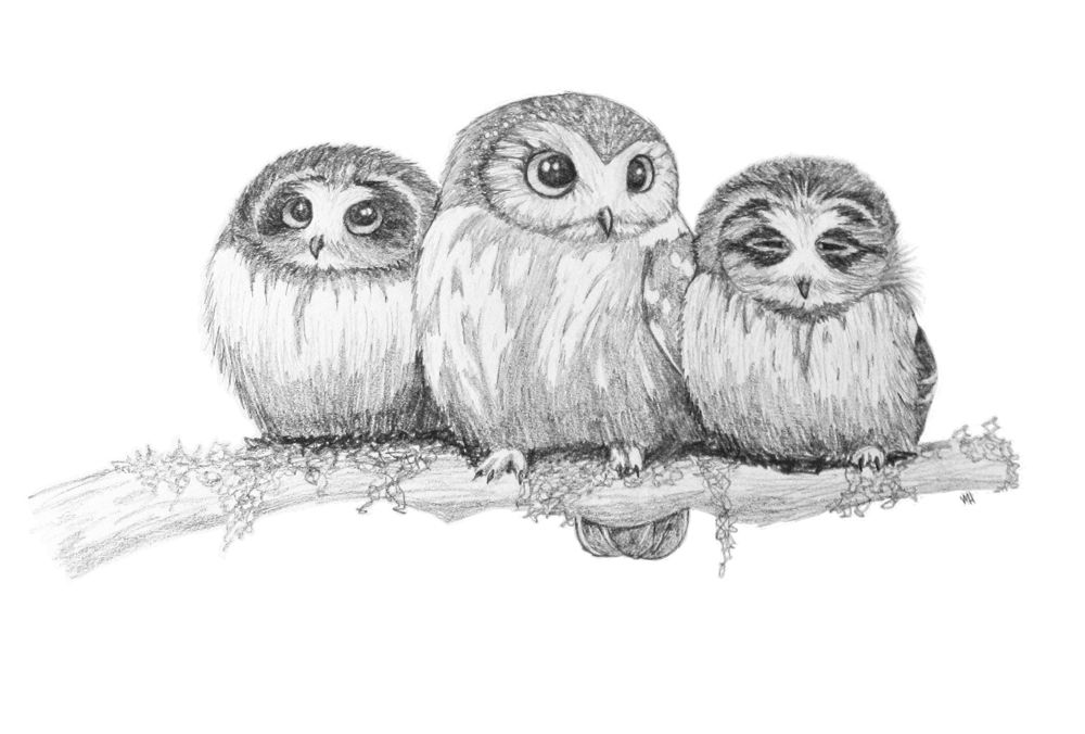 cute owl drawings - 1000×676